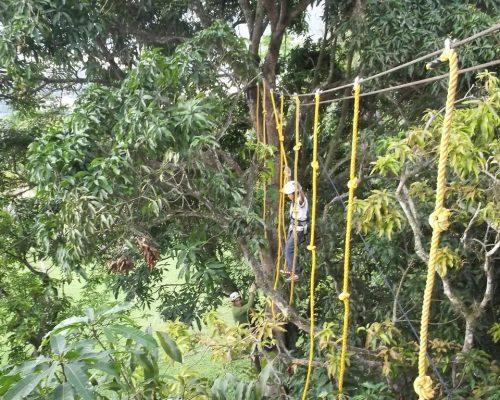 Canopy en la Mesa de Ruitoque