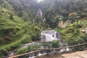 El 'mar verde de Colombia' en el Eje Cafetero: destino para descansar