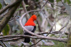Colombia es campeón mundial de avistamiento de aves por cuarta vez