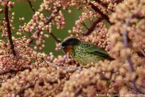 Colombia, campeona mundial en diversidad de aves